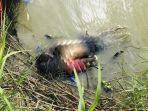 kisah-mengenaskan-di-balik-foto-ayah-dan-putrinya-yang-tenggelam-lagi.jpg
