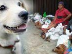 kolase-daging-anjing-di-pasar-pancurbatu-sumatera-utara_20180222_175152.jpg