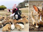 kolase-foto-kelinci-di-pulau-kelinci-jepang.jpg