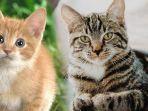 kolase-tribun-manadounsplashcomnvidia-developer-blog-kucing.jpg
