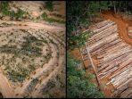 kondisi-hutan-di-papua.jpg