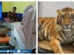 korban-sulis-saat-dibawa-ke-rumah-sakit-dan-ilustrasi-harimau.jpg