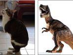 kucing-able-mirip-dinosaurus-t-rex_20161215_090132.jpg