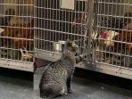 kucing-baik-ini-membantu-para-hewan-di-rumah-sakit-fox.jpg
