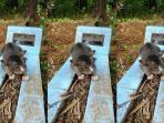 kucing-setia_20161105_105522.jpg