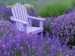 lavender-marjorie-k-wallace-photography-facebook.jpg