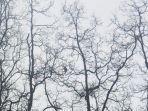 mamalia-bekantan-berada-di-pohon-mangrove.jpg