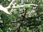 mangrove-center-graha-indah_3.jpg