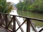 mangrove-pesona-wisata-alam.jpg