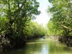 mangrove_20160718_170806.jpg