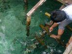 memberi-makan-ikan-di-laut-desa-sawinggrai_20180216_095843.jpg