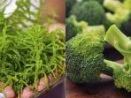 net-via-tribunbatamidsiquries-ilustrasi-rumput-laut-dan-brokoli.jpg