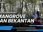 news-video-wisata-konservasi-mangrove-dan-bekantan-kota-tarakan-berangasur-normal.jpg