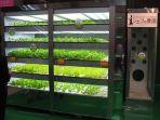 oddeecom-sayuran-hijau.jpg