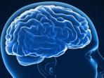 otak-manusia_20151202_142443.jpg