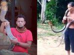 pawang-ular-di-kalbar-tewas-digigit-king-kobra-panji-petualang-buka-suara-soal-2-penyebabnya.jpg