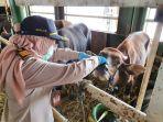 pemeriksaan-fisik-175-ekor-sapi-potong-dari-gorontalo-oleh-pejabat-karantina.jpg
