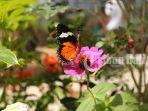 pengunjung-bisa-berinteraksi-langsung-dengan-kupu-kupu-di-balitopia-butterfly-park.jpg