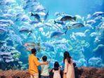 pengunjung-yang-sedang-menikmati-koleksi-ragam-biota-laut-di-sea-world-ancol.jpg