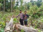 personel-polsek-gunung-tabur-saat-mendatangi-tkp-pohon-tumbang-yang-menewaskan-seorang-warga.jpg