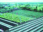 pertanian-kubar.jpg