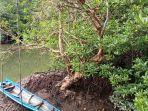 pesona-wisata-alam-hutan-mangrove.jpg