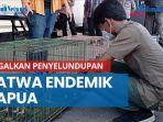 petugas-kp3-gagalkan-penyelundupan-satwa-endemik-papua-di-pelabuhan-sorong.jpg