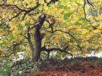 pohon-chestnut_20180120_215206.jpg