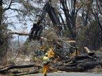puing-kebakaran-hutan-australia.jpg