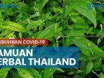 ramuan-herbal-ini-dipakai-thailand-sembuhkan-pasien-covid-19.jpg