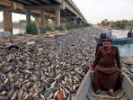 ribuan-ikan-mati-di-irak_20181105_103433.jpg
