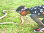 rizky-sedang-bermain-dengan-ular-king-cobra_20180711_132224.jpg