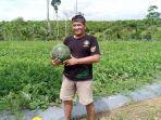 salah-satu-petani-semangka-di-desa-tepian-baru-km-10.jpg