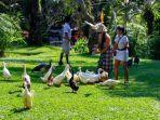 serunya-suasana-di-bali-bird-park-di-daerah-singapadu-batubulan-gianyar.jpg