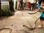 swns-via-mail-online-seorang-anak-di-india-menjadikan-ular-kobra-sebagai-mainannya.jpg