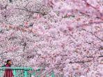 travelandleisurecom-sakura-di-jepang.jpg