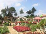 tribun-jabar-bunga-balinea-di-taman-begonia-lembang-kabupaten-bandung-barat.jpg