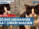 viral-kucing-kelaparan-terus-menatap-dan-terlihat-seperti-menangis-saat-diberi-makanan.jpg