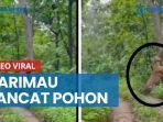 viral-video-kemunculan-harimau-di-hutan-kampung-grobogan-ini-faktanya.jpg