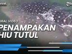 viral-video-penampakan-hiu-tutul-di-pantai-tangerang-wisatawan-diimbau-tak-berenang.jpg