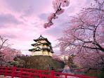 wallfoncom-ilustrasi-bunga-sakura-di-jepang.jpg