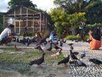 warga-kunjungi-taman-tiga-generasi-bermain-bersama-burung-merpati.jpg