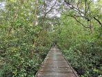 wisata-hutan-mangrove-kampung-baru.jpg