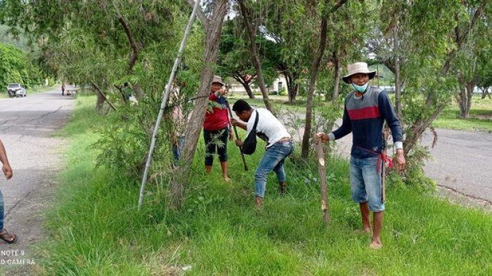 Alumni Politani Kupang Nagekeo Tanam Anakan Pohon di Mbay, Doni Moni : Kita Peduli