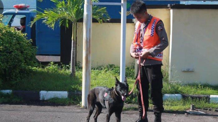 Polda NTT Terjunkan 6 Anjing Pelacak Cari Jenazah Korban Bencana di Flotim dan Lembata
