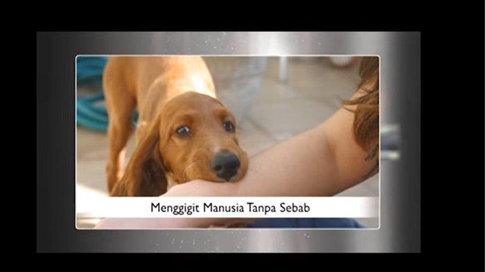Enam Pasien Digigit Anjing Disuntik Vaksin Rabies
