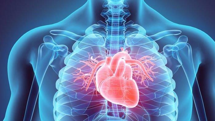 Cara Mencegah Penyakit Jantung yang Paling Efektif, Penyebab dan Gejalah Penyakit Jantung