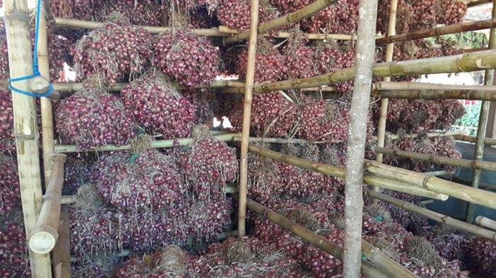 Bawang Merah Lembata Kuasai Pasar Lewoleba