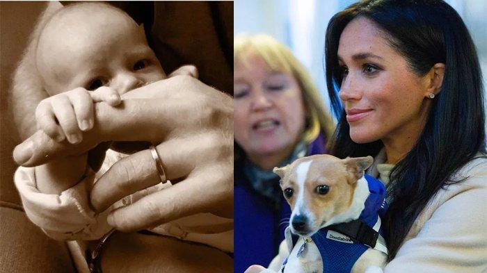 Meghan Markle Ingin Mengadopsi Anjing Penyelamat untuk Archie Agar Tumbuh dengan Hewan yang Setia