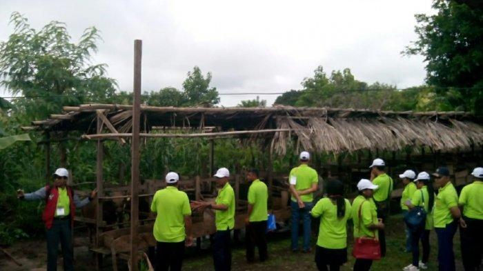 Peserta Diklat Pelatihan Budidaya Sapi Potong BBPP Kupang Kunjungi Kelompok Tani Setetes Madu